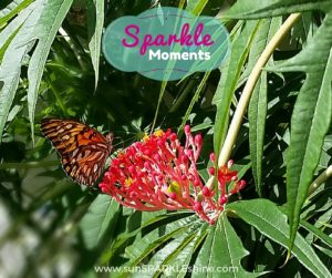 Sparkle Moments - beautiful butterfly gives us weekend inspiration